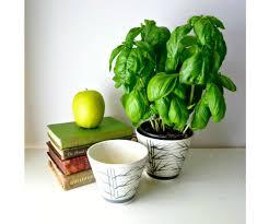 Green Plants Preferential Pots Plus Completed Then Decorations Plants