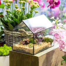 glass house plants promotion shop for promotional glass house