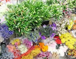 flower wholesale jet fresh flower distributors wholesale flowers miami wholesale