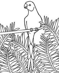 printable parrot coloring pages for kids cool2bkids birds