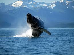 trend picture of whales 2 5596