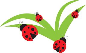 ladybug lady bug clip art bug flower leaf branch clipart personal