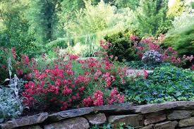 drift roses create drifts of roses the garden fairies