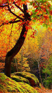 cute fall wallpapers fall wallpapers for android 51 wallpapers u2013 hd wallpapers