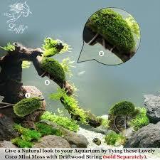 Nature Aquascape Luffy Coco Mini Moss Builds A Beautiful And Natural Aquascape