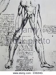 Leonardo Da Vinci Human Anatomy Drawings Study Of Anatomy By Leonardo Da Vinci 15th Century Skeletal