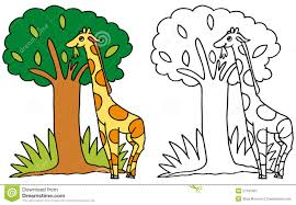 cute giraffe eating leaves color and bw stock image image 27161601