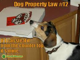 Law Dog Meme - dog property law 9