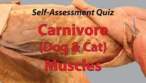 Abdominal Anatomy Quiz Carnivore Muscle Quiz