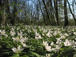 le si e 5 roś które znajdziesz wiosną w lesie kasiadytrych pl