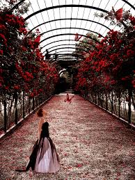 roses and butterflies by on deviantart