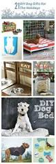 21 diy dog gifts for the holidays the everyday dog mom