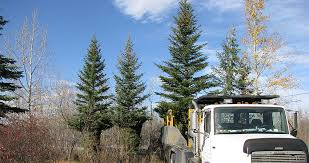 tree sales tree moving ltd
