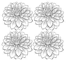four dahlia flowers flowers and vegetation coloring pages for