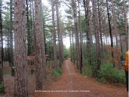 Massachusetts forest images Haunted massachusetts ghostly sites to visit this halloween jpg