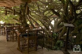 Treehouse Hotel In Costa Rica Tree House Monteverde Costa Rica Gh Treebar Pinterest Tree