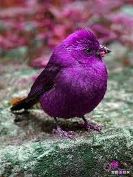 Colors Of Purple 97 Best Birds Butterflies And Flowers Images On Pinterest Nature