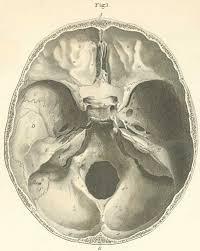 Base Of The Skull Anatomy Anatomy Atlases Atlas Of Human Anatomy Plate 2 Figure 1