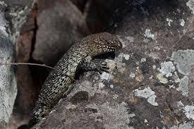 australian reptile show sydney nsw reptile park