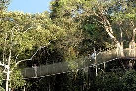 canopy amazon amazon rainforest canopy walkway
