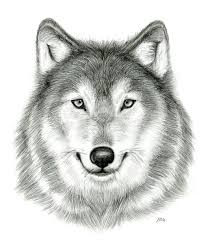 81 best drawing images on pinterest wolf drawings draw and art