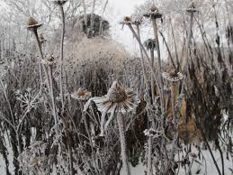 the new perennialist explorations in naturalistic planting