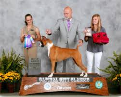 boxer dog shows 2016 66th annual specialty show 2 heart of america boxer club inc