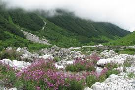 flower places valley of flowers national park travel guide at wikivoyage