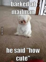Cute Pet Memes - cute animal memes cure the soul craveonline