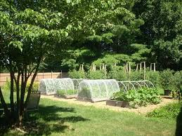 effective and attractive vegetable garden fence ideas