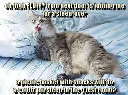 Funny Sleep Memes - lolcats sleep lol at funny cat memes funny cat pictures with