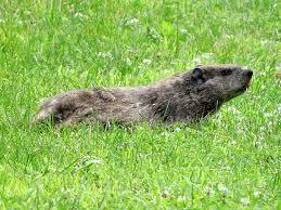 enjoy winter groundhog natural lands