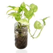 8 Houseplants That Can Survive by Perennial Houseplants That Clean Indoor Air
