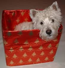 12 healthy gift ideas for dogs a z vets