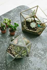 home accessory terrarium plants cactus wheretoget