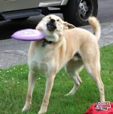 imagenes asquerosas de accidentes accidentes caninos fotos de humor