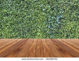 wooden leaves wall green leaves wall background wooden floor stock photo 334202753