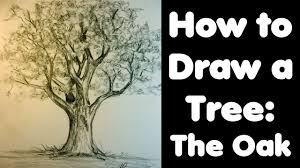 how to draw a tree the oak youtube