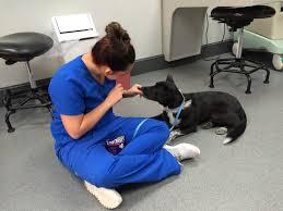 animal medical hospital blog u2013 charlotte nc pet education
