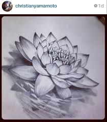 pictures flowers lotus pencil art pictures drawing art gallery