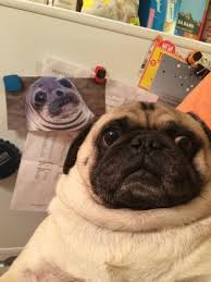 Awkward Seal Meme - long lost twins awkward moment seal know your meme