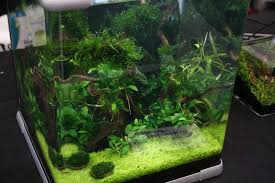 Live Plants In Community Aquariums by Nano Planted Tank 6 Tiny Aquarium Plants Aquariadise
