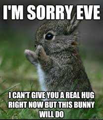 im sorry bunny memes quickmeme