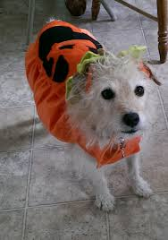 Ghost Dog Halloween Costumes by Photos How Do You Halloween Show Us Your Costumes Good News