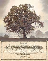 25 beautiful tree of life meaning ideas on pinterest where did