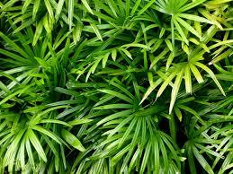 leaves green nature bushes tropical desktop wallpaper