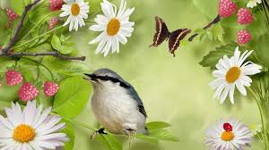 Flower And Bird - how to attract birds and butterflies to your garden a p nursery