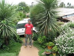 file beautiful garden in addis ababa fertilised with urine and