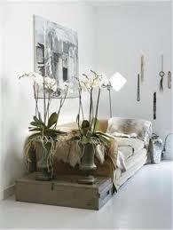 Wohnzimmerm El Rot Vom Wald Ins Wohnzimmer Orchideen Und Bromelien