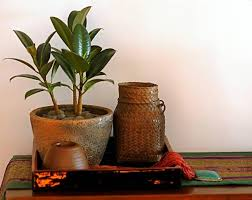 Plants Home Decor Green Home Decor That Cleans The Air Top Eco Friendly House Plants